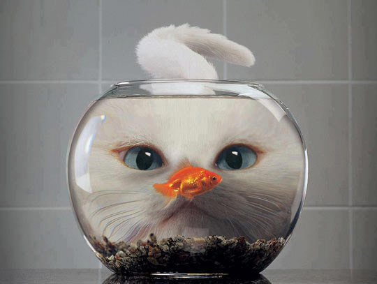 chat-aquarium